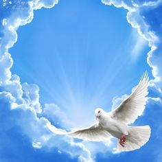 He rose from the dead. Hallelujah Hosanna Blessed be the name of the Lord. Dove Images, Dove Pictures, Nature Pictures, Beautiful Nature Wallpaper, Beautiful Birds, Heaven Pictures, White Pigeon, Image Jesus, Heaven Art