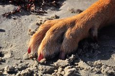 Sand, concrete, and asphalt can get extremely hot during the summer months. If you can't hold your hand over a surface for over a few seconds, please don't walk your dog on  without foot protection. Either use booties especially made for dogs or walk your dog on grass.