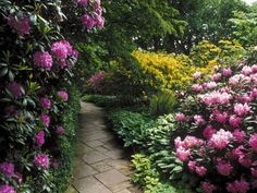 Pictures of gorgeous gardens beautiful flower garden, flower forest cool wa Wonderful Flowers, Beautiful Flowers Garden, Beautiful Gardens, Beautiful Scenery, Beautiful Images, Garden Wallpaper, Handy Wallpaper, Flower Video, Flower Garden Design