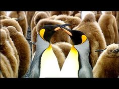 Frozen World - Pinguin Safari - Into Antarctic Waters