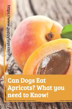 Visit here to check out can dogs eat apricots on PuppyFAQS Blog! If you are looking to find out if it's safe to give your puppy dried apricots as a snack, then this is the blog post for you! For the definitive guide on Can Dogs Eat Apricots, click to be directed to the PuppyFAQS blog. If you still need help after reading our article on whether or not your pooch can eat apricots, please leave us an email at liz@puppyfaqs.com and we'll get back as soon as possible. Happy pup parenting! :) Fruits For Dogs, Apricot Seeds, Fruit List, Toxic Foods, Dried Strawberries, Can Dogs Eat, Dried Apricots, Dog Eating, Dog Snacks
