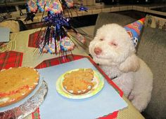 Heute hat jemand besonderes Geburtstag