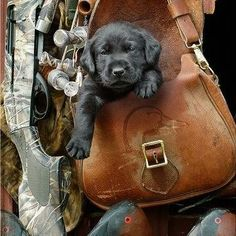 Soon to be Hunting dog