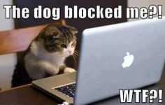 Funny cats, funny pics, hilariousness, humour animal, jokes funny …For more hilarious humor and funny pics visit www.bestfunnyjokes4u.com