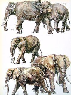 Elephants, Pikas - 1972 Vintage Encyclopedia Print Book Page 2 Sided