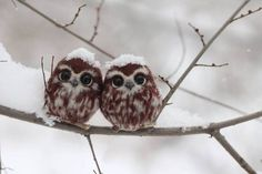 Just two little owls sitting in a tree, that is all.