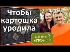 Для МОЩНОГО урожая картофеля делайте такъ! - YouTube Youtube, Сад, Газированные Напитки