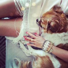 The best arm party