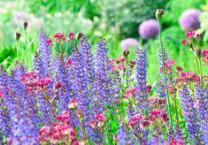 Gartenzauber | Sterndolden – die fabelhafte Welt der Astrantien - Gartenzauber