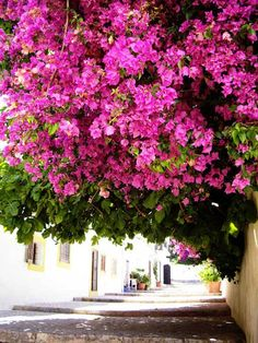 Colors of Ibiza ~ bougainvillea Love Flowers, Beautiful Flowers, Hippie Accessoires, Beautiful World, Beautiful Places, Eivissa Ibiza, Pink Day, Madrid, Destinations