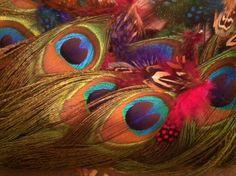 Peacock Feathers - Bren Mason