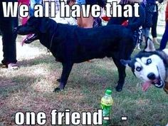Check out: Animal Memes - We all have. One of our funny daily memes selection. We add new funny memes everyday! Bookmark us today and enjoy some slapstick entertainment! Silly Cats Pictures, Funny Animal Photos, Animal Memes, Animals Photos, Animal Mashups, Humorous Pictures, Fail Pictures, Animal Funnies, Animal Antics