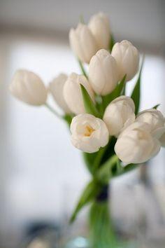 Tulips  - flowers Photo