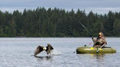 Eagle snatches Lake Padden fisherman's catch right off his line / Photo: Rick Warren