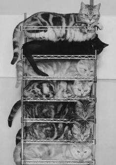 organizing your cats- made simple with the NEW CAT O RACK........
