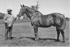 famous racing quarter horses | ... THE GREAT MAN O WAR WITH WILL HARBUT THOROUGHBRED RACE HORSE POSTCARD