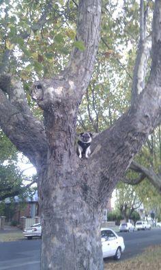 Check this funny animal here: http://funnypicsofanimals.com/post/142495298145 #funny #animal #lol #haha #gif #fail