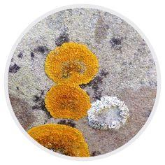 Circle - Organic Matter - 413 - Random Series - Diane Manton - 3rd October 2014 On October 3rd, October 2014, Organic Matter