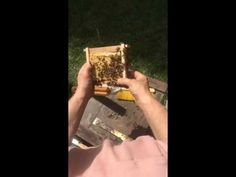 ECO BEE BOX - MODERN BEEHIVES & BEES: How to save a colony with an Eco Bee Box 26 Frame Comb/Brood Beehive by Albert Chubak