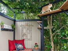 If you're looking for photos of cats in catios, look no further! Go here for various catio designs; before and after shots; and, of course, cats!