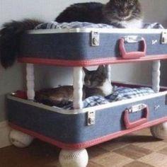 Che ne dite di riciclare la vecchia valigia per farne una cuccia trendy per il pet? Guarda la foto e prendi spunto!