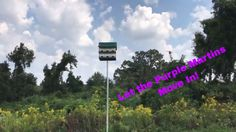 We installed a purple martin house at my mother in laws and are going to install one at mine as well. This is a little how-to on how to put it up. I do know that martins will eat honeybees every now and again but everything I have read from people who keep both say they get along fine. #Homestead #prepper #survivalist #offgrid #lifestyle #health #style