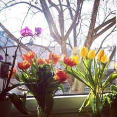 Vem primavera 🌸🌺🌷🌺 Instagram, Plants, Travel, Destinations, Spring, Viajes, Plant, Traveling, Trips