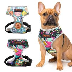 Small Puppies, Small Dogs, Dogs And Puppies, French Bulldog Prices, Yorkshire Terrier, Pet Dogs, Dog Cat, French Bulldog Harness, Carlin