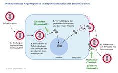 #Amantadin #Antiviralia #M2 Blocker (dopaminerge, anticholinerge W.) #Parkinson / Influenza Typ A