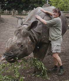 A zookeeper bonds with a one-horned Indian rhino named Bertus before celebrating his birthday at the Edinburgh Zoo in Scotland. Isn't he beautiful? Visit Edinburgh, Baboon, Rhinos, He's Beautiful, 5th Birthday, Pet Care, Scotland, Elephant, Indian