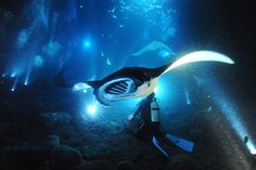 Swimming at night with the giant manta rays in Kona, Hawaii.  One of the most amazing things Ive ever done.