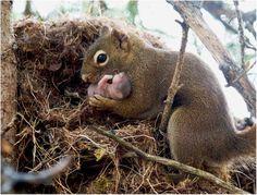 new born squirrel