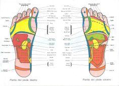 La pressione profonda sui piedi,stimola le linee zonali,migliora la circolazione e la trasmissione nervosa,disintossica le zone congestionate e riduce il dolore.Il piede destro ospita i riflessi appartenenti agli organi sul lato destro del corpo,il piede sinistro quelli relativi al lato sinistro.