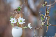 Zita Elze Easter Flowers - eggshell with white flowers - Photo: Julian Winslow 6028_wm