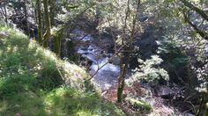 Paisaje senda del río Troncoso Trunks, Plants, Scenery, Fotografia, Drift Wood, Tree Trunks, Plant, Planets