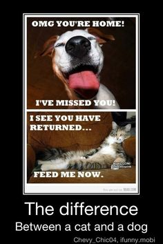 feed me now!  this is for all of my dog loving friends...yes cats are exactly like this!