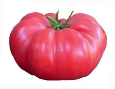 Heirloom Tomato Seeds, Tomatoes, Non-GMO, Untreated, Organic Seed – Sandia Seed Company Heirloom Tomato Seeds, Heirloom Tomatoes, Vegetable Garden, Garden Plants, Potted Fruit Trees, Types Of Lettuce, Pink Fruit, Organic Seeds, Chicken Eggs