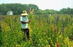 West Cape May Flower Farm/Sea Dragon Herbery