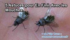 Petites mouches, grosses mouches, mouches vertes... voici 5 astuces de grand-mère pour en finir avec elles !  Découvrez l'astuce ici : http://www.comment-economiser.fr/fini-mouches.html?utm_content=buffer3bb41&utm_medium=social&utm_source=pinterest.com&utm_campaign=buffer