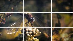 Next time you snap a photo for your digital channels, consider this tip. Rule of Thirds Shows Dragonfly positioned near a power point