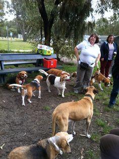 Beaglefest Whiteman Park