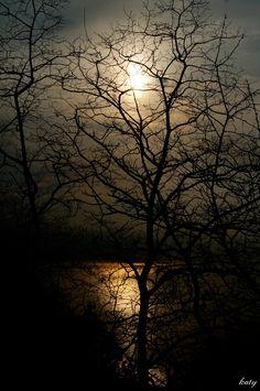 il sole tra gli alberi cinque terre  la spezia