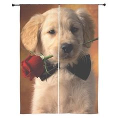 Cute Puppy With Rose Curtains