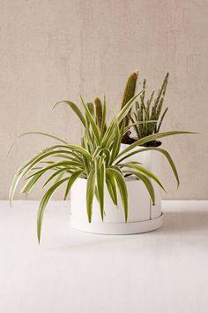ikea ananas pflanze gr npflanzen und bert pfe im pers nlichen stil beleben die einrichtung. Black Bedroom Furniture Sets. Home Design Ideas
