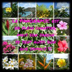 Le jardin de PANORAMIC - collage