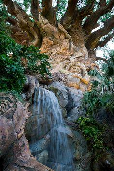 Waterfall, Animal Kingdom