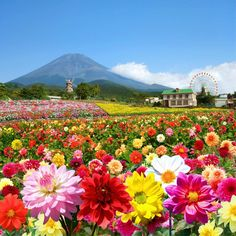 花畑40選。国内にある見たら感動せざるを得ない圧巻の景色!