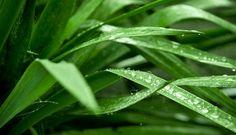 Fastenwandern mit Grünen Smoothies auf Korsika - Vital99plus GreenGold