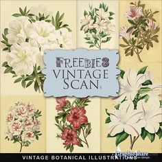 free vintage scrap kit vectors - Google Search