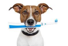 Cómo combatir el mal aliento de mi perro. blog.theyellowpet.es